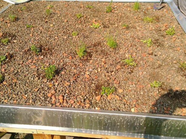 Klima- und Artenschutz durch naturnahes Gärtnern